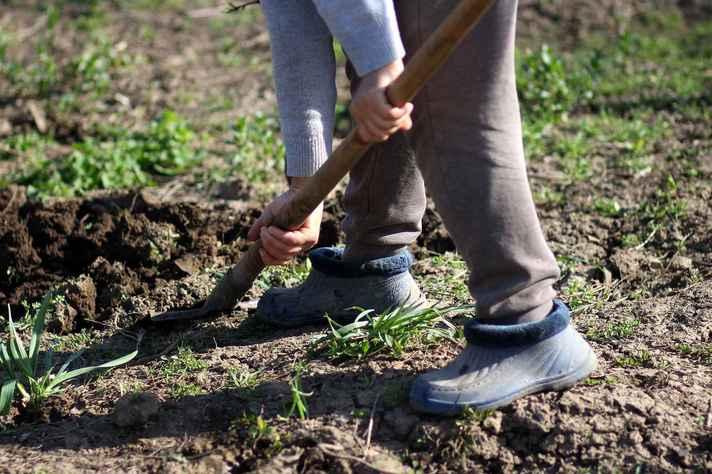 Trabalhadores rurais não pararam atividades mesmo com a pandemia