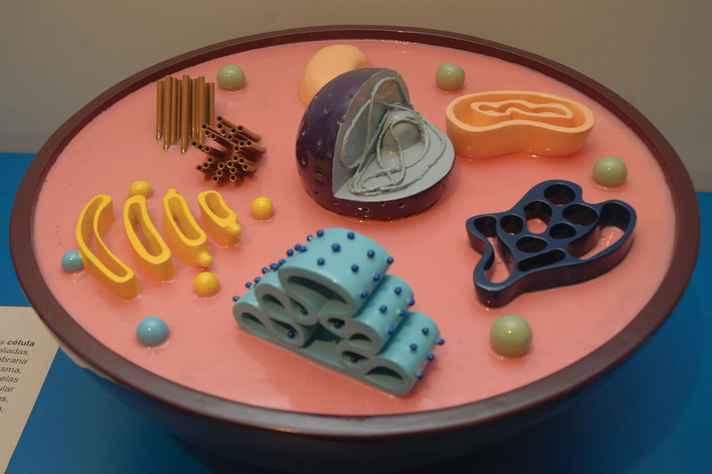 Representações de organelas da coleção A célula ao alcance das mãos, do Museu de Ciências Morfológicas
