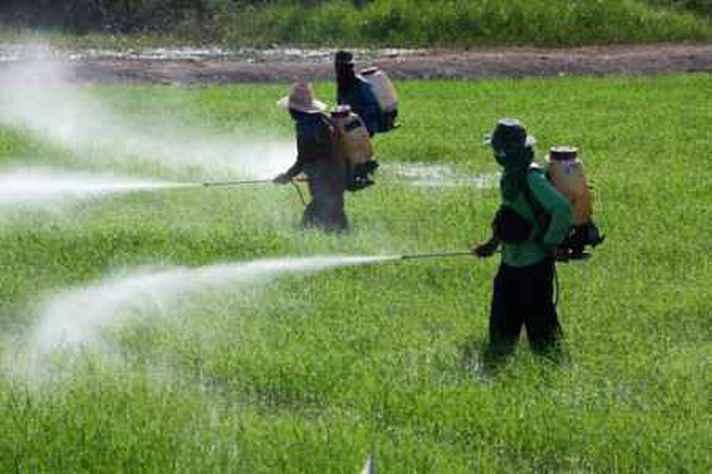 Aplicação de agrotóxicos em plantação