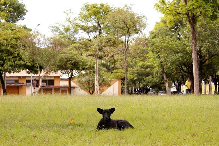 Cachorro descansa no campus Pampulha