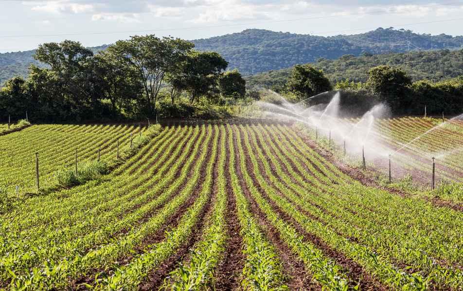 Plantações no campus regional da UFMG em Montes Claros