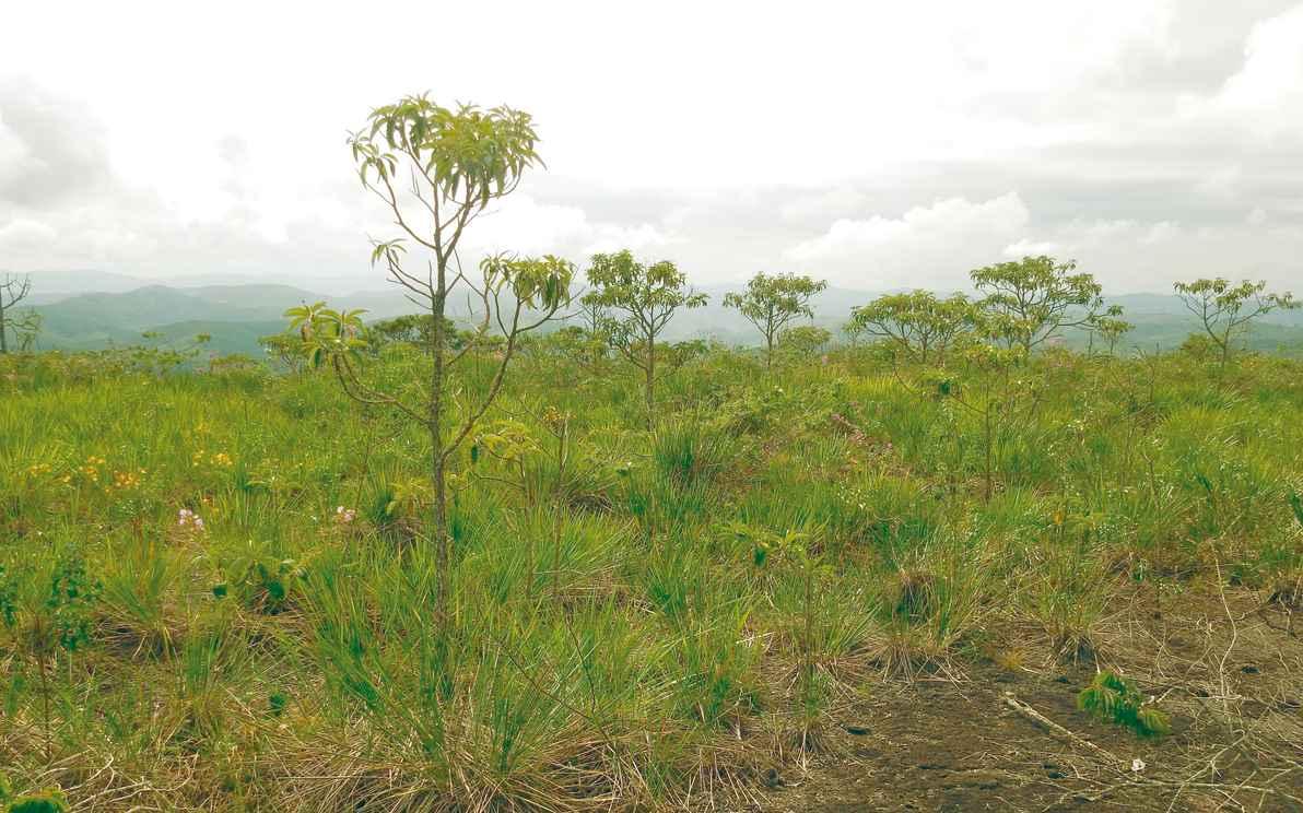 Paisagem de cerrado: mais de 1,9 milhão de hectares destruídos de 2013 a 2015