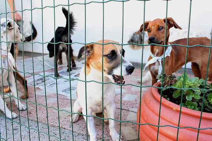 Manejo de animais como cães para prevenir doenças é desafio para BH