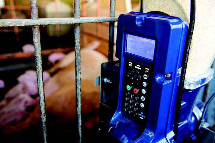 Sistema armazena dados sobre alimentação dos animais