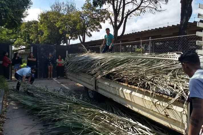 O babaçu, que cobrirá o telhado, foi colhido em Aldeia Verde, Minas Gerais
