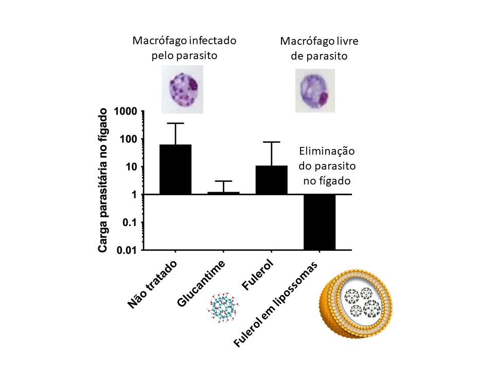 Gráfico mostra queda significativa da carga parasitária no fígado quando o fulerol é administrado em lipossomas na comparação com o fulerol sem lipossomas e com o glucantime, medicamento tradicionalmente usado no tratamento da doença