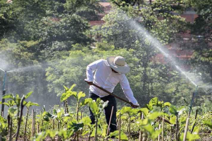 Experimento em plantação no ICA: