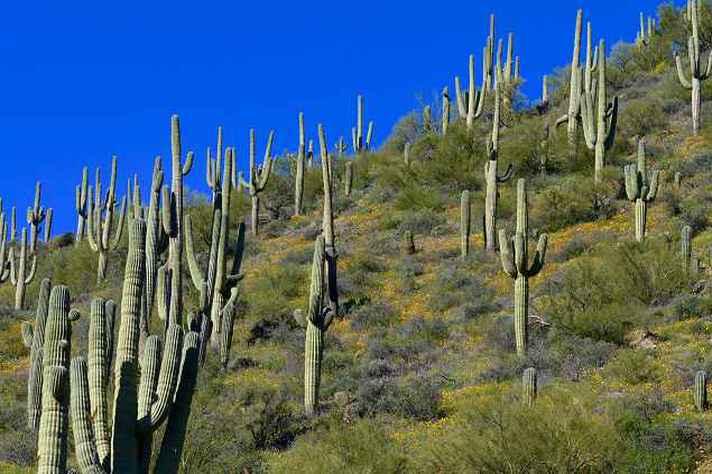 Deserto de Sonora, nos Estados Unidos: