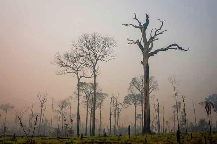 """Trecho da Floresta Amazônica incendiado: obra de Leopold permanece """"à frente do nosso tempo"""", segundo o tradutor Rômulo Ribon"""
