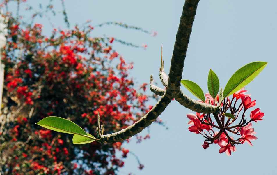 Flores no Instituto de Ciências Exatas, campus Pampulha