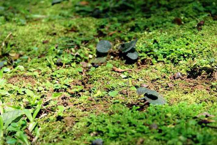 Selecionada na última chamada do Serrapilheira, a pesquisa do professor da UFMG Luiz Eduardo busca entender a origem das plantas terrestres.