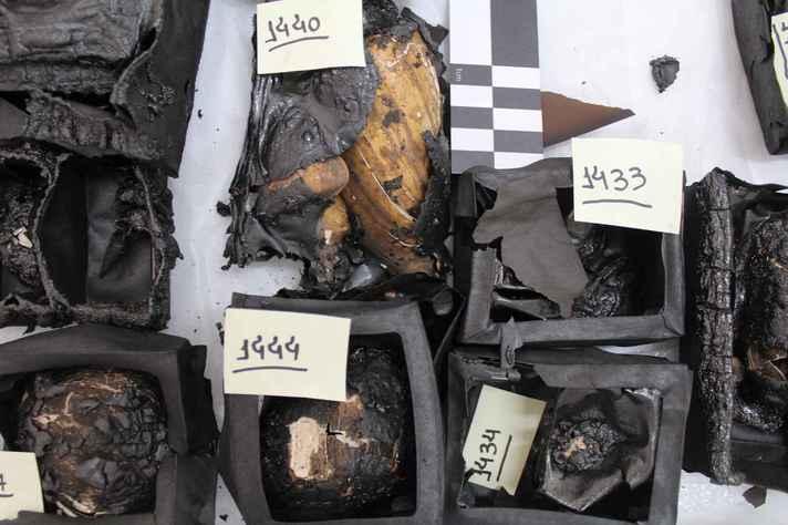 Exemplares parcialmente queimados da coleção de conchas de moluscos e seus recipientes: plataforma possibilitará fazer o registro sistemático de diagnósticos dos acervos