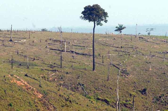 Novo ministro do Meio Ambiente, Ricardo Salles, questiona dados sobre desmatamento na Amazônia