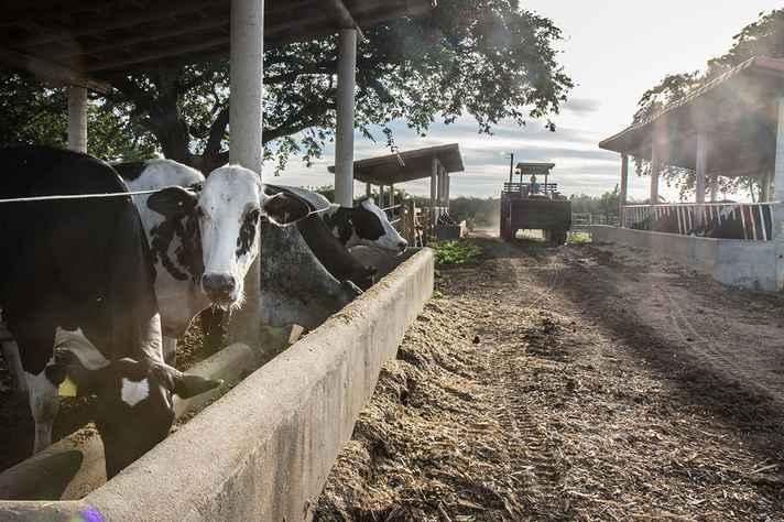 Os Mestrados em Produção Animal e em Alimentos e Saúde, oferecidos no campus da UFMG em Montes Claros, estão com inscrições abertas até a segunda semana de fevereiro