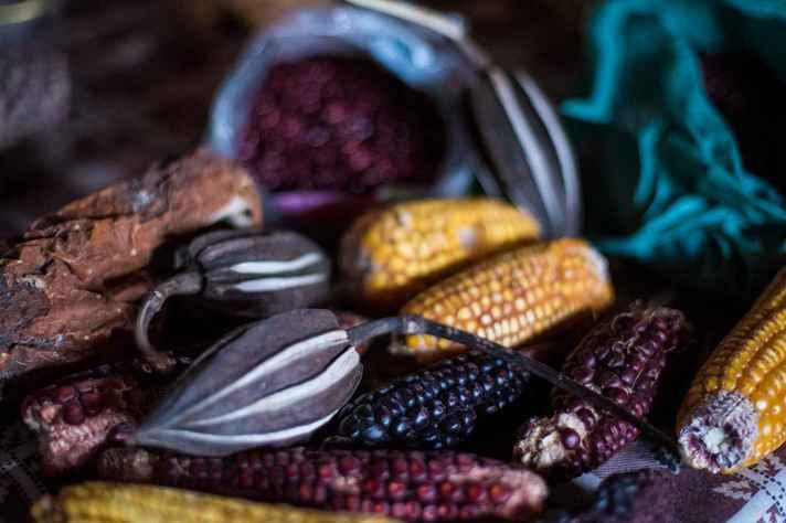 Sementes crioulas de produtos cultivados no Norte de Minas por agricultores familiares
