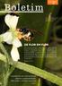 Capa Boletim - Na Serra da Mantiqueira, a abelha Actenosigynes mantiqueirensis busca alimento em flor de Blumenbachia amana