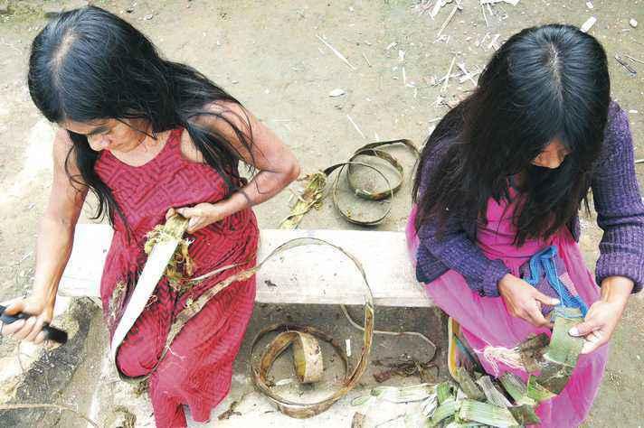 Renata e Julinha, mãe e filha, raspam a casca da embaúba