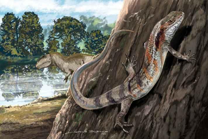 Montagem com reconstituição do 'Neokotus sanfranciscanus', com um carcarodontossaurídeo ao fundo