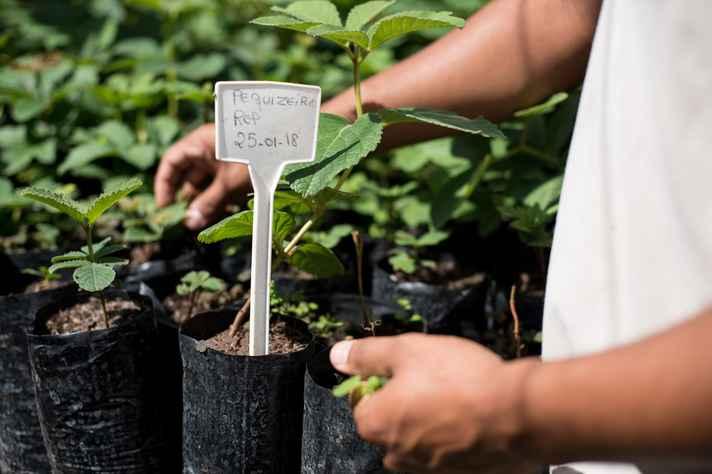 Dormência das sementes pode impedir a germinação após o plantio