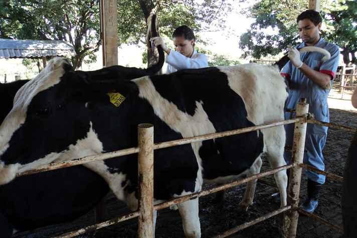 Tópicos do curso tratam de doenças em bovinos