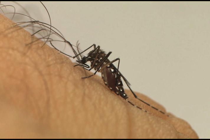 Pesquisadores, gestores e sociedade debatem impactos sociais da Zika