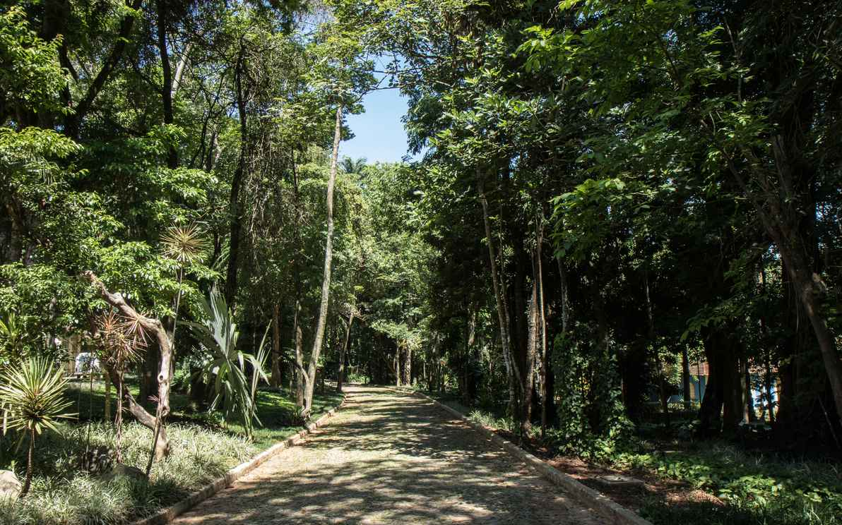 Ocupando área de 600.000 m², o  MHNJB oferece opções de passeio ao ar livre e ao seu acervo científico