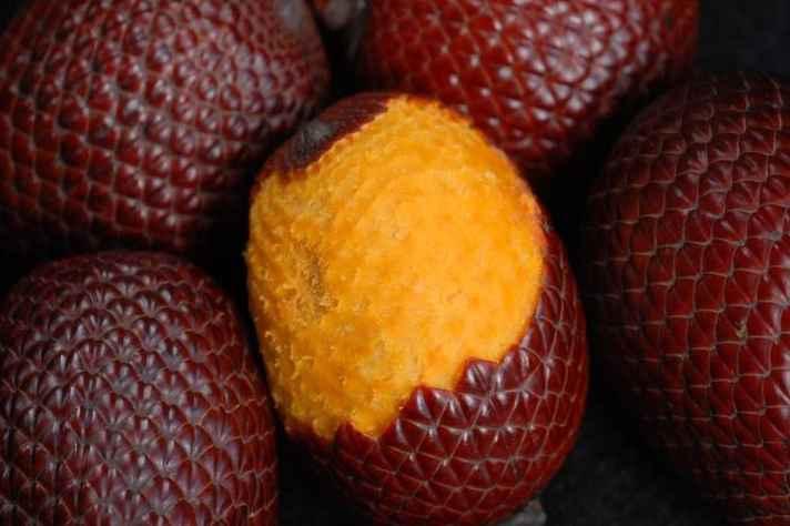 Frutos da palmeira de buriti