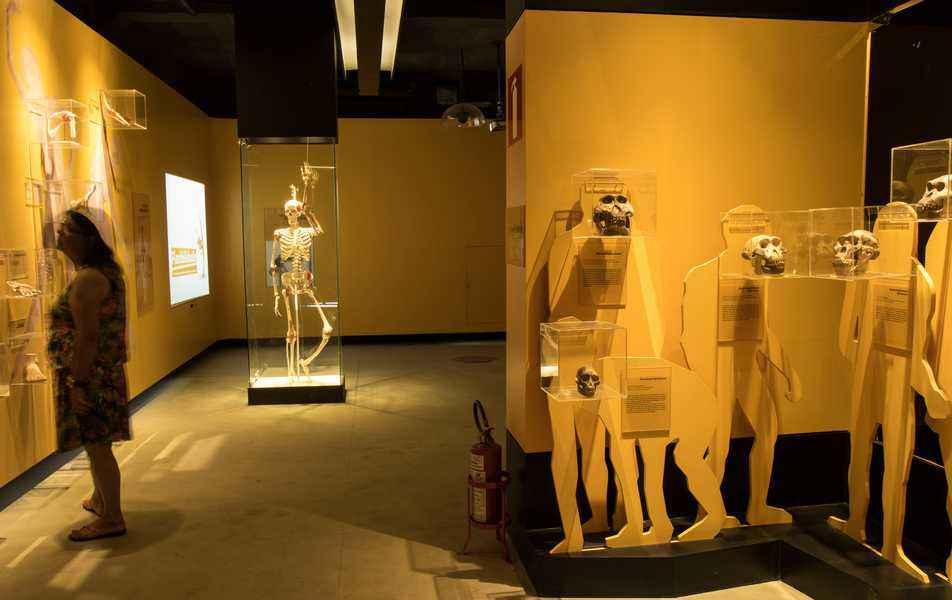 Docentes têm até o dia 23 para se inscrever no programa de bolsas de IC na Rede de Museus