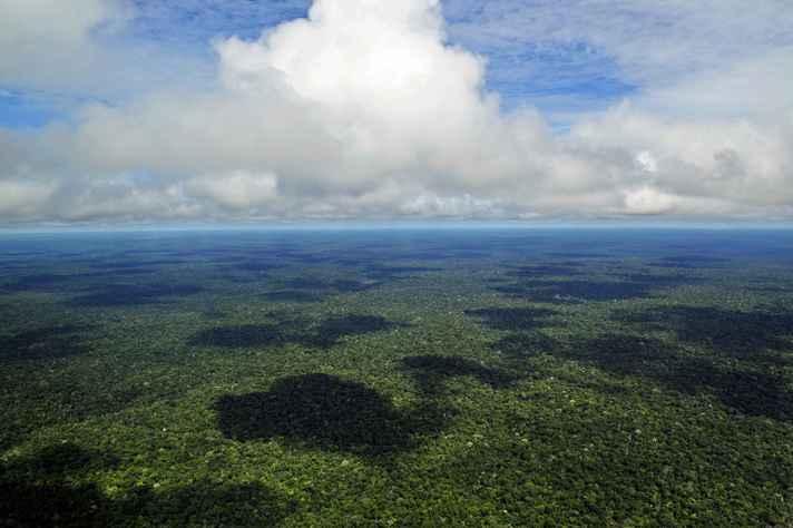 Fotografia aérea de uma pequena parte da Amazônia brasileira próxima a Manaus, Amazonas