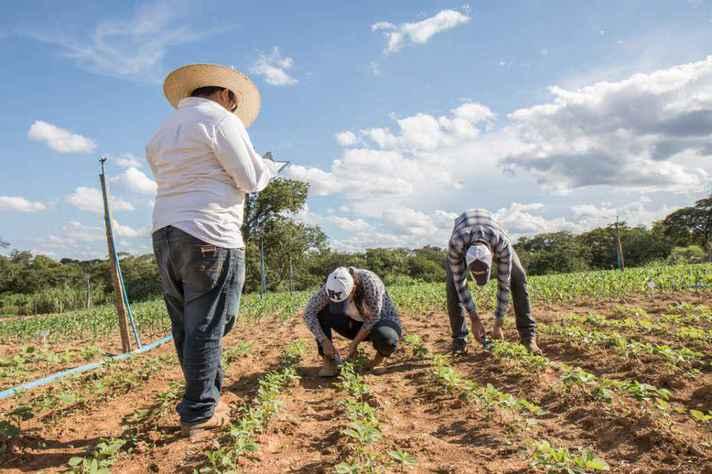 Cultivo em Montes Claros: duas das vagas são para técnico agrícola