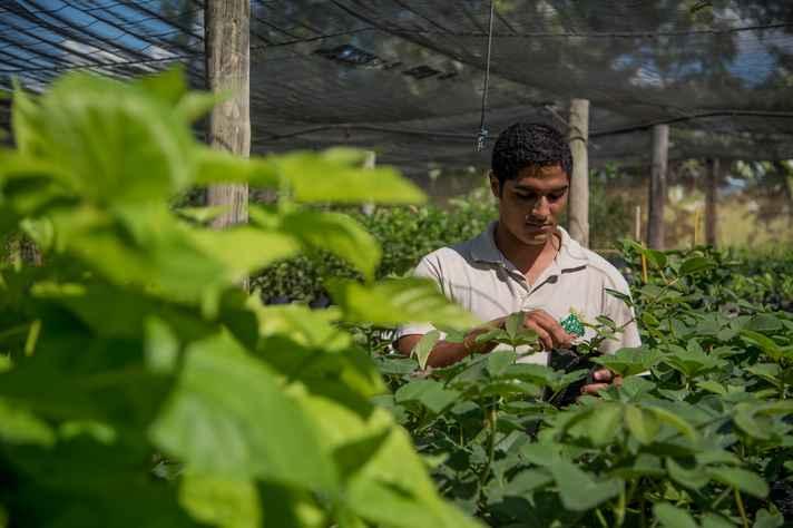 Viveiro de mudas no ICA abriga atividades práticas do curso de agronomia